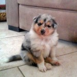 150111 - Hutchey pup 1