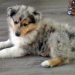 150111 - Hutchey pup 2