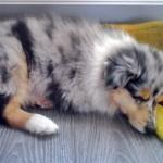 150111 - Hutchey pup 3