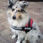 150111 - Hutchey pup 7