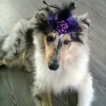 150111 - Hutchey pup 8