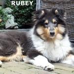 150614 - Rubey 1